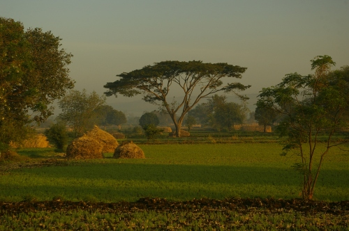 An Indian farm in the Morning